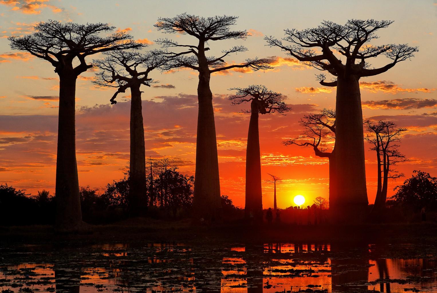 baobab de madagascar, tourisme, voyage à madagascar, vacances, hotel, parc, restaurant
