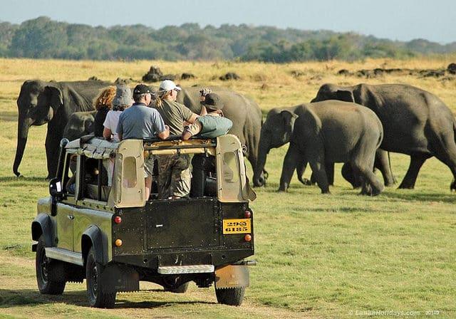 iniaina.com_Ce qu'il y a à voir au Sri Lanka pour les vacances d'été