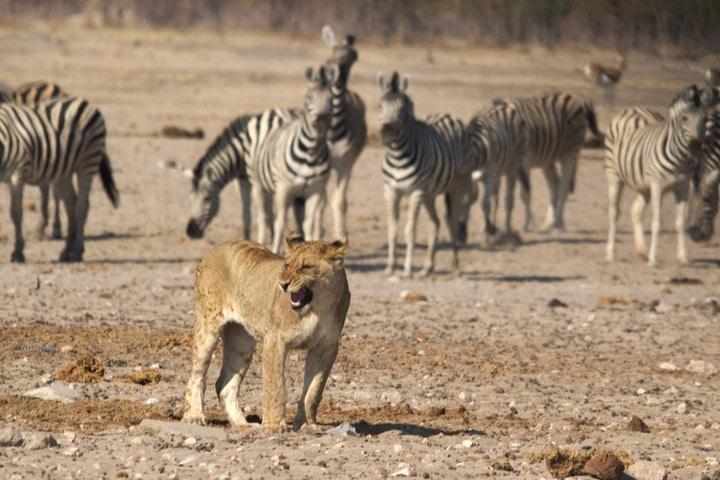 Faire un safari en Namibie : conseils pour réussir votre voyage